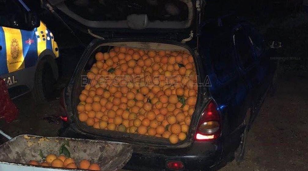 Polícia para carros abarrotados de laranjas na Espanha (Foto: Emergencias Sevilla/Twitter)