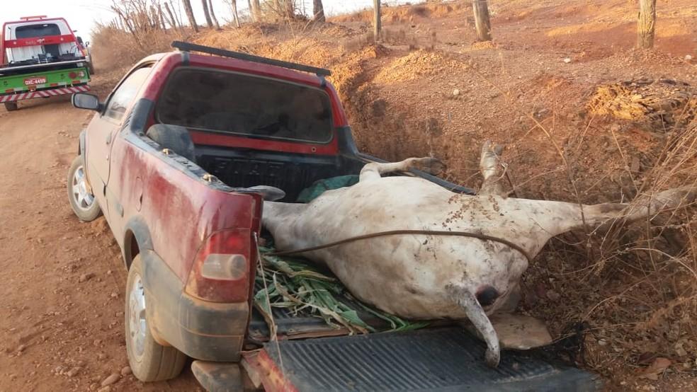 Criminosos deixaram o animal amarrado na carroceria do veículo — Foto: Polícia Militar/Divulgação