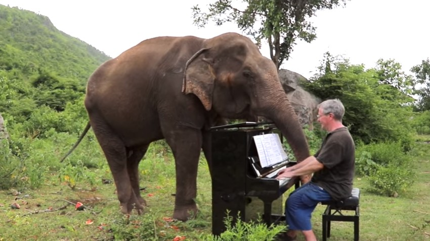 Elefante Romsai escuta atentamente Sonata de Beethoven (Foto: Reprodução/ YouTube Paul Barton)