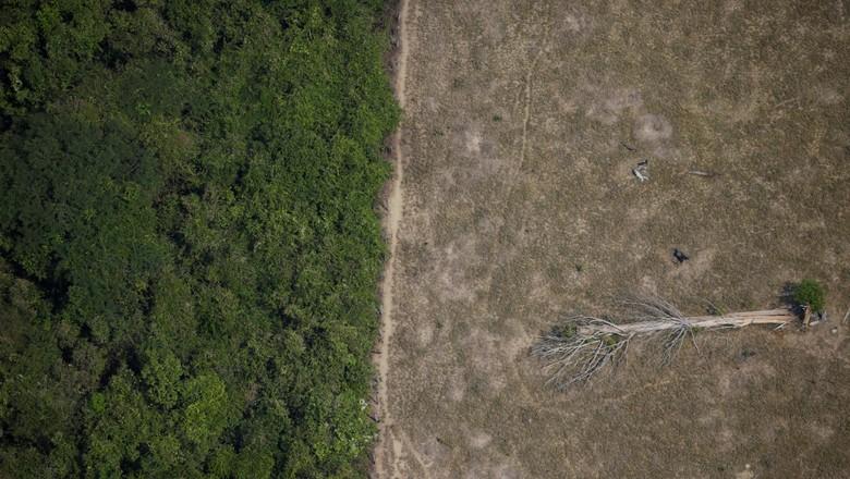 Área desmatada da Amazônia perto de Porto Velho, em Rondônia (Foto: Ueslei Marcelino/Reuters)