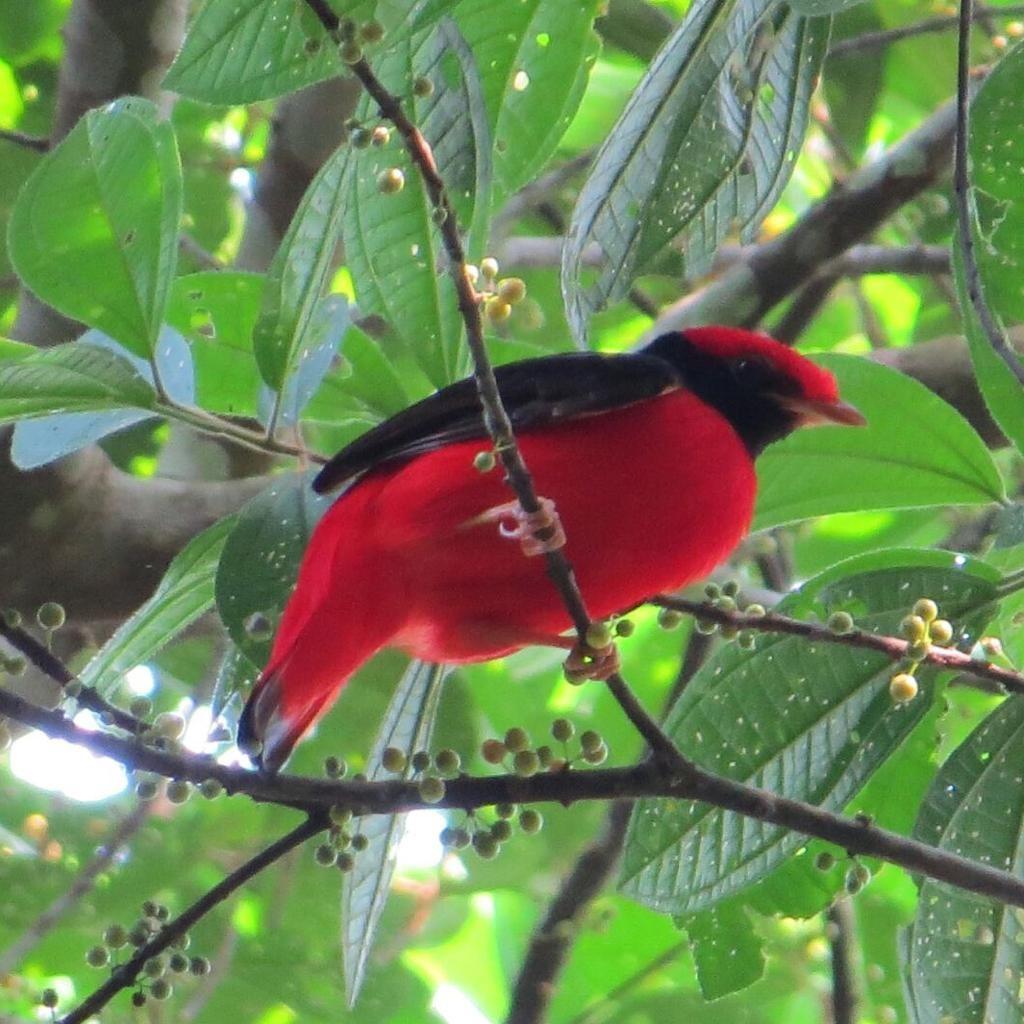 Empresários fotografam pássaros durante passeios pelo cerrado de MT e encontram espécie rara; veja imagens
