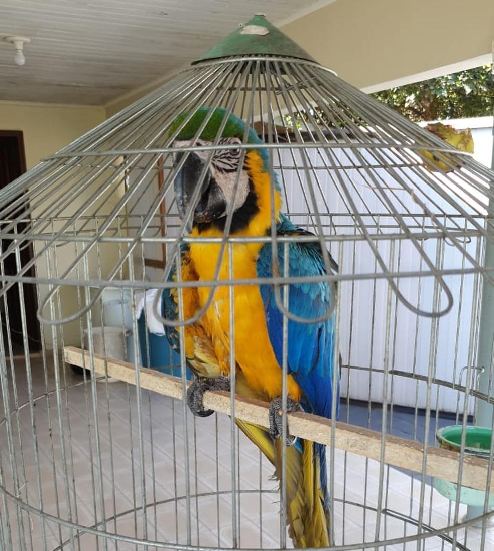 Ave que sobreviveu foi achada com ferimentos nas asas e levada para veterinário — Foto: Arão Leite