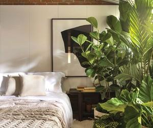13 espécies de plantas para ter no quarto e melhorar o sono