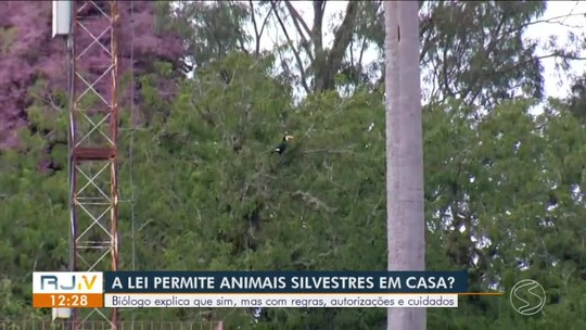 Em 2019, mais de 500 casos de caça e guarda de animais silvestres foram registrados no Rio