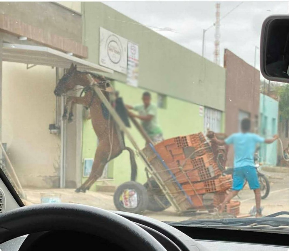 Burro fica suspenso em carroça com excesso de peso no Bairro Salesianos, em Juazeiro do Norte. — Foto: Divulgação