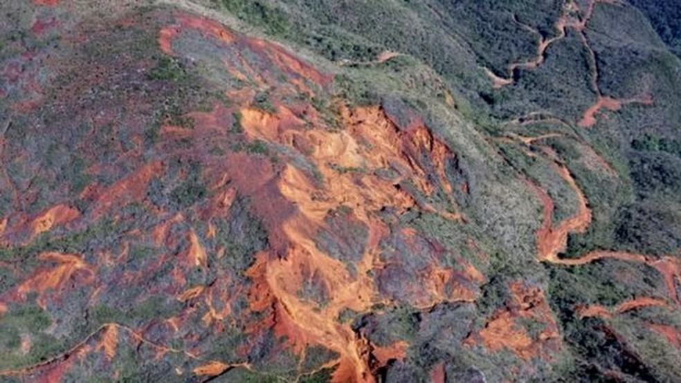 De acordo com pesquisadores, a árvore, que pode chegar a 20 metros de altura, está ameaçada pelo desmatamento — Foto: Getty Images via BBC