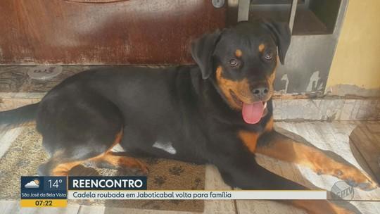 Cadela levada em carro roubado do adestrador é encontrada na zona rural de Monte Alto, SP