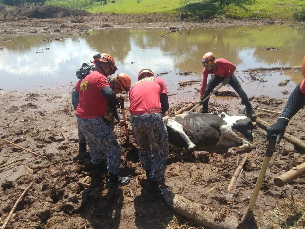 Bombeiros da Força Nacional chegaram a Brumadinho neste final de semana e já estão auxiliando nas buscas  — Foto: Corpo de Bombeiros do RN