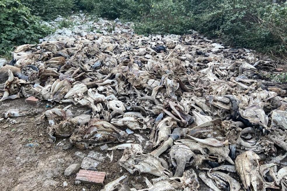 Dejetos despejados irregularmente no solo, provocando poluição — Foto: Adepará