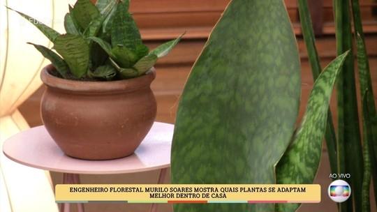 É de Casa: veja quais plantas se adaptam melhor dentro de casa