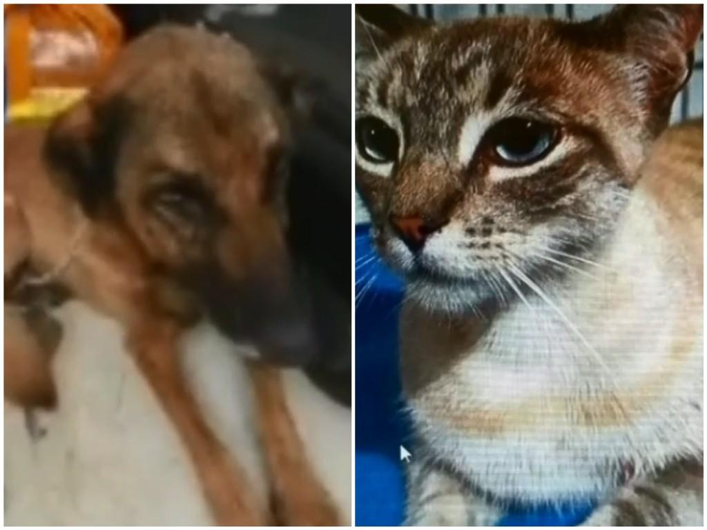 Laudo aponta que cadela e gata achadas abandonadas em casa sofreram maus-tratos