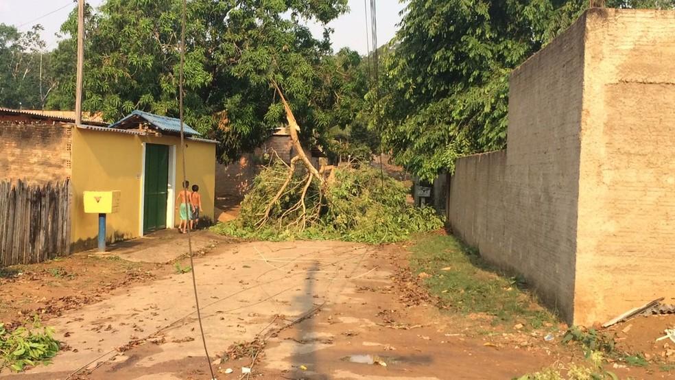 Árvore caiu sobre a fiação elétrica e deixou parte do bairro Nacional sem energia (Foto: Aléxia Letícia/Rede Amazônica)
