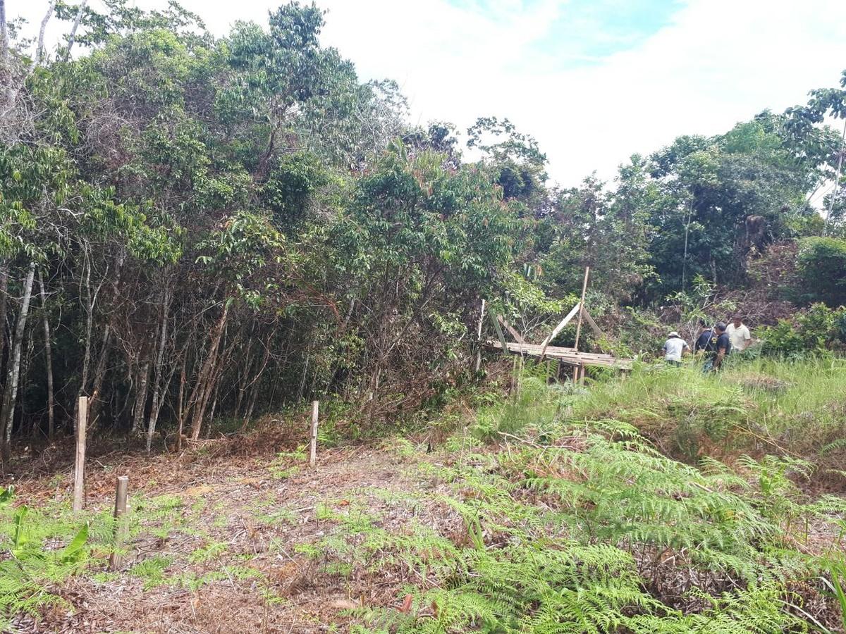 Homem é preso ao ser flagrado cortando árvores em área de preservação permanente em Cruzeiro do Sul