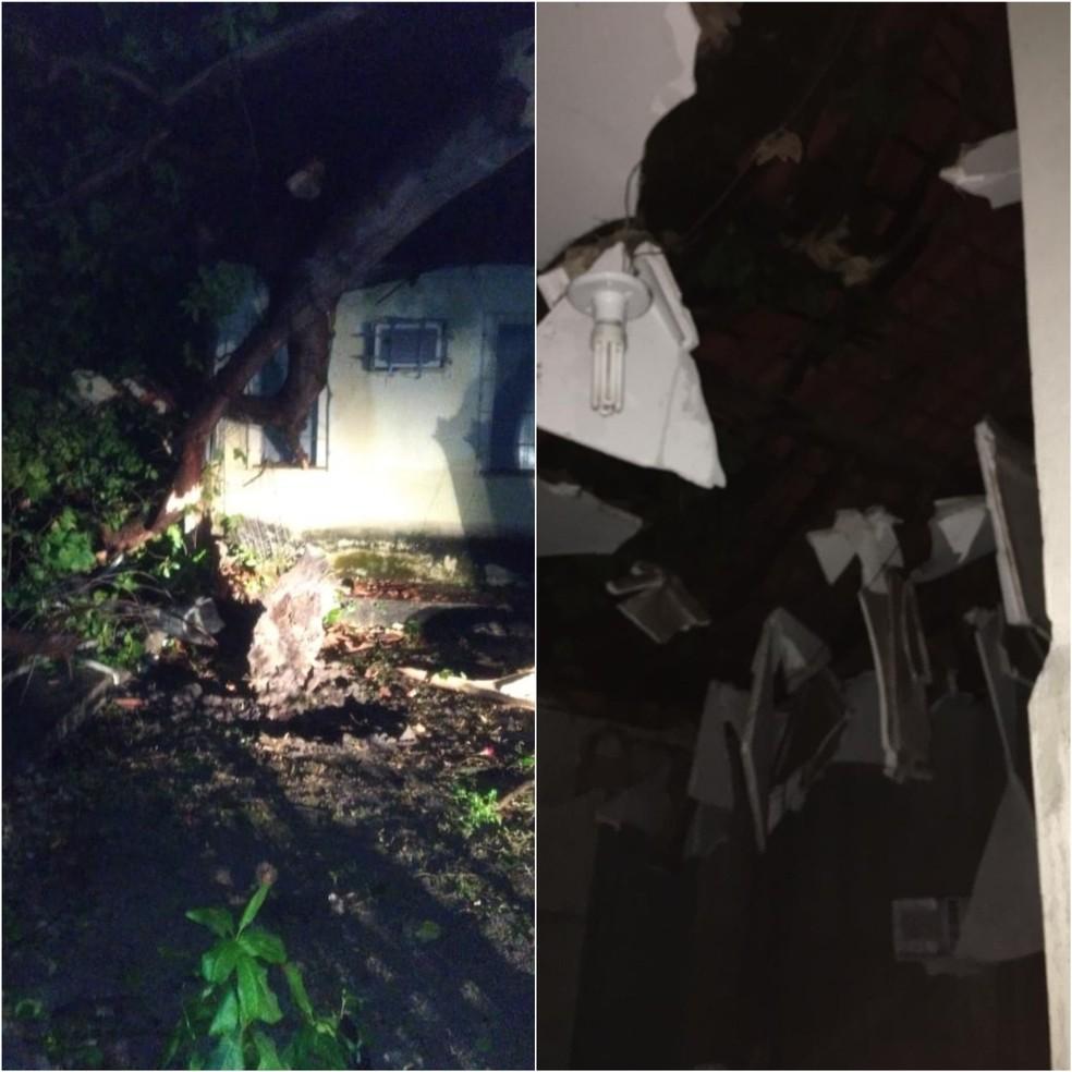 Árvore caiu em cima da coordenação do curso de Administração da Uespi, campus Pirajá — Foto: Divulgação/Redes sociais