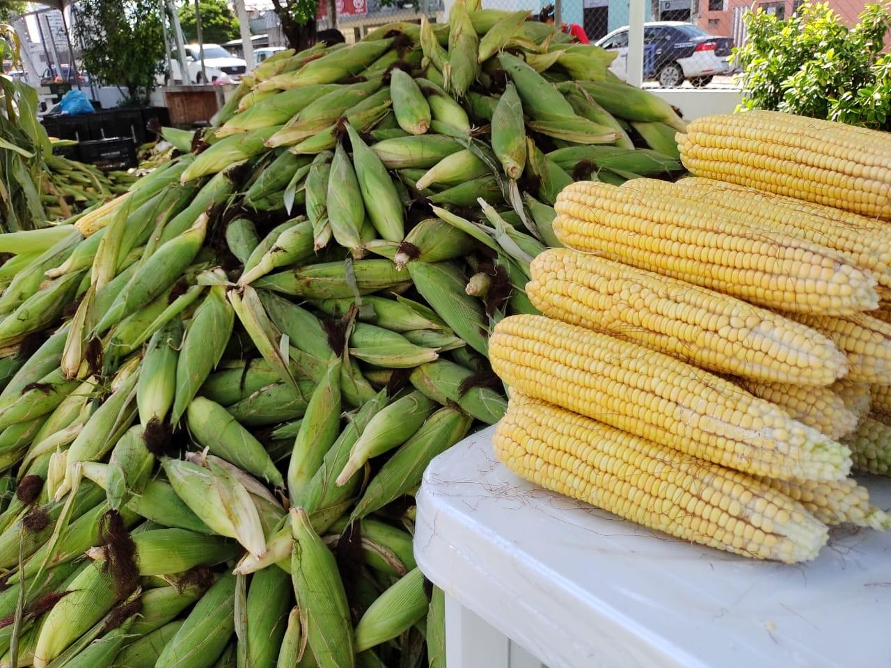No mês das festas juninas, preço médio do milho é R$ 0,70 em Natal, diz Procon