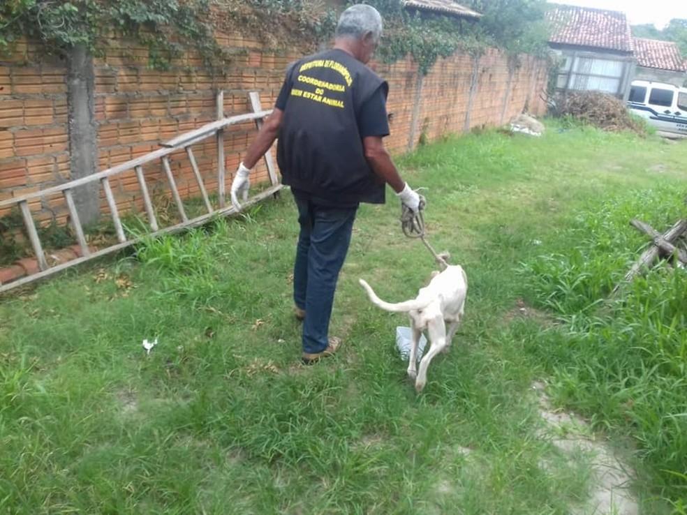 Animal estava numa casa no bairro Rio Vermelho, em Florianópolis. — Foto: Prefeitura de Florianópolis/Divulgação