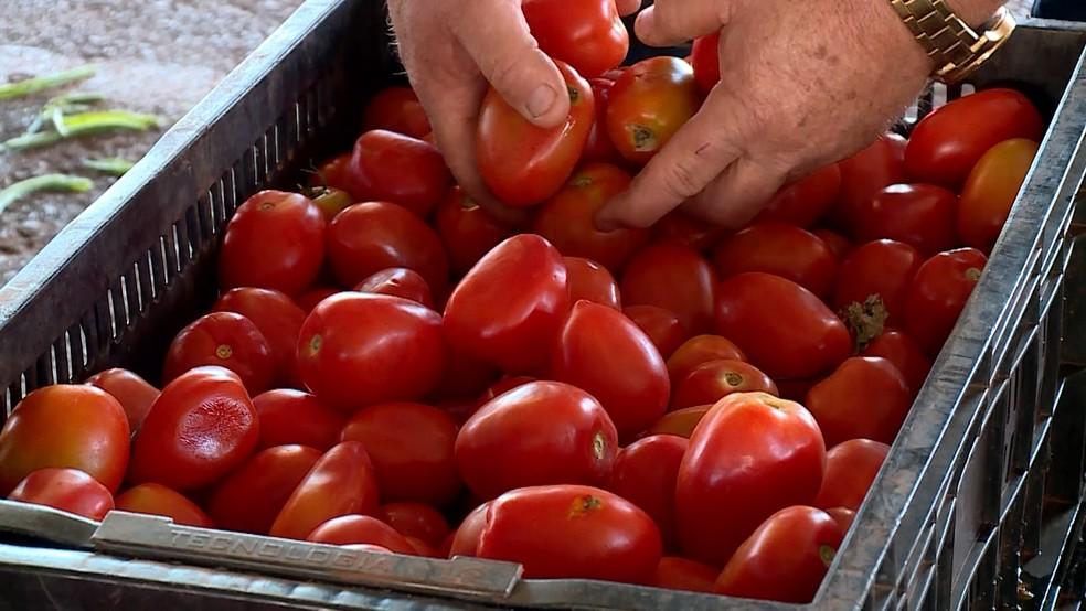 Assim como a batata, tomate chegou a ser vendido pelo dobro do preço (Foto: Reprodução/TV Integração)
