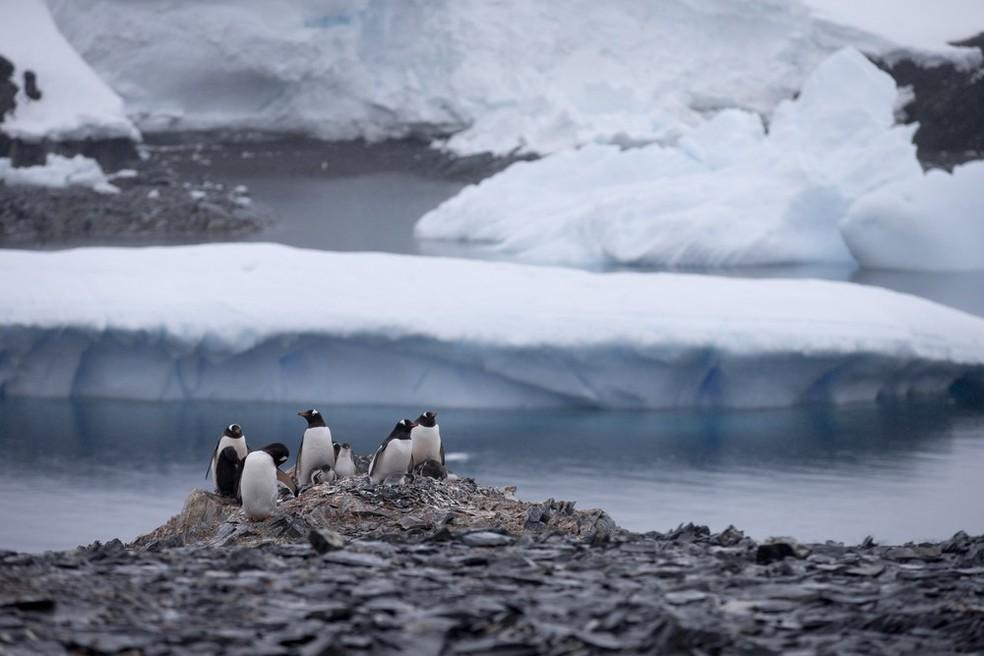 Pinguins na Antártida em foto de janeiro de 2015 — Foto: AP Photo/Natacha Pisarenko, File
