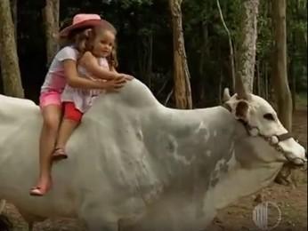 Boi da raça nelore é criado como bicho de estimação em Suzano (Foto: Reprodução/TV Diário)