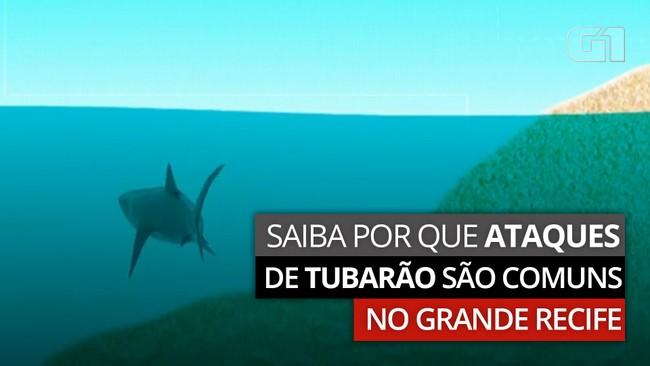 Entenda por que ocorrem tantos ataques de tubarão na praia de Piedade, no Grande Recife