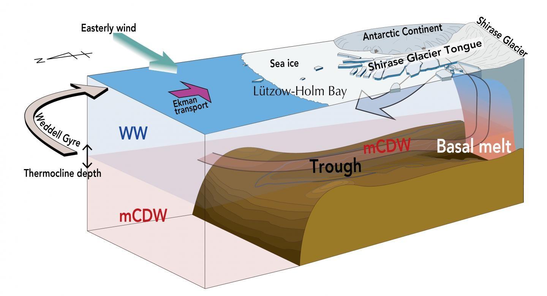 Representação gráfica mostra como as águas profundas atingem a geleira Shirase (Foto: Daisuke Hirano et al./Nature Communications)