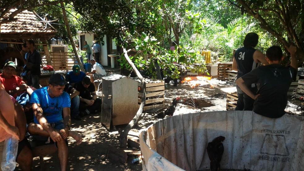Local onde acontecia rinha de galos na propriedade rural em Ribas do Rio Pardo (MS) (Foto: BpChoque/Divulgação)