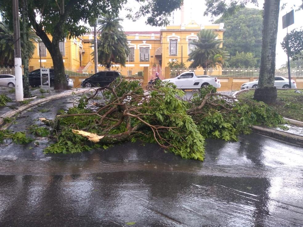 Trânsito fica parado devido a queda de árvores em Itapeva — Foto: Caio Antunes/TV TEM