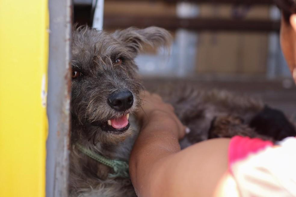 Alguns dos animais resgatados estão disponíveis para adoção. — Foto: Fábio Romão e Matheus Ponce