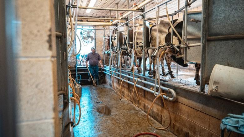 produção leite (Foto: Getty Images)