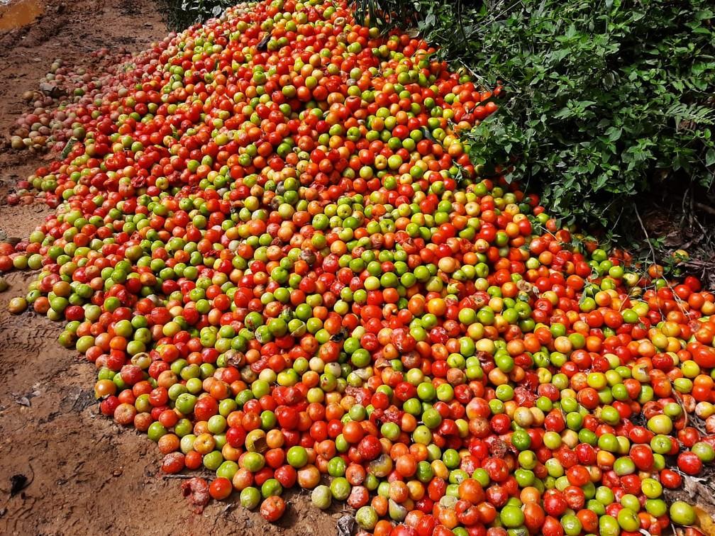 Toneladas de tomates são descartadas às margens de estradas em Ribeirão Branco (SP) — Foto: Caio Nogueira/TV TEM