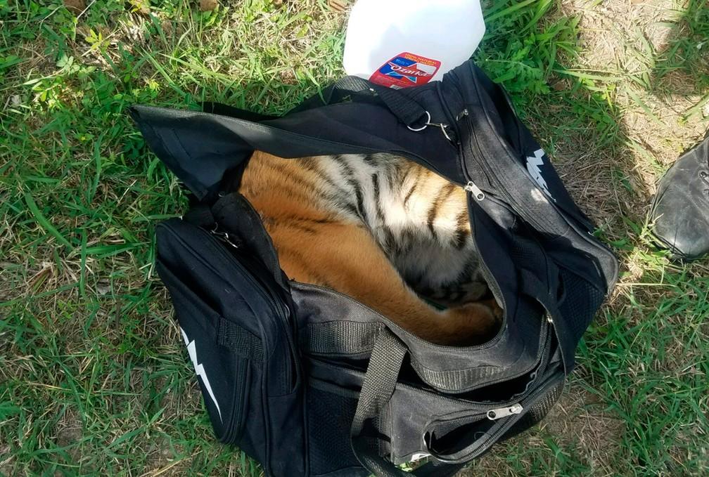 Filhote de tigre é abandonado em mochila na fronteira entre EUA e México (Foto: U.S. Customs and Border Protection via AP)