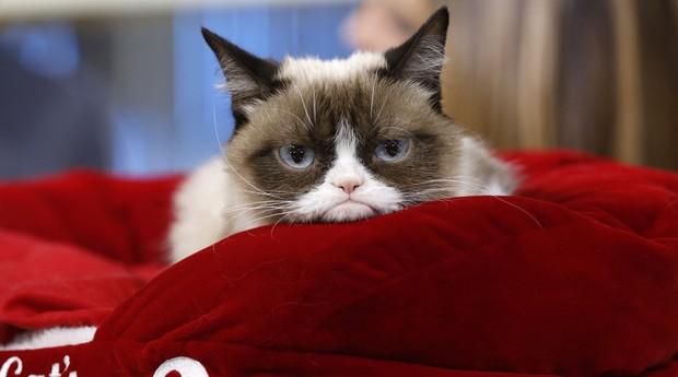 Grumpy Cat, sucesso nas redes e negócio de sucesso (Foto: Reprodução)