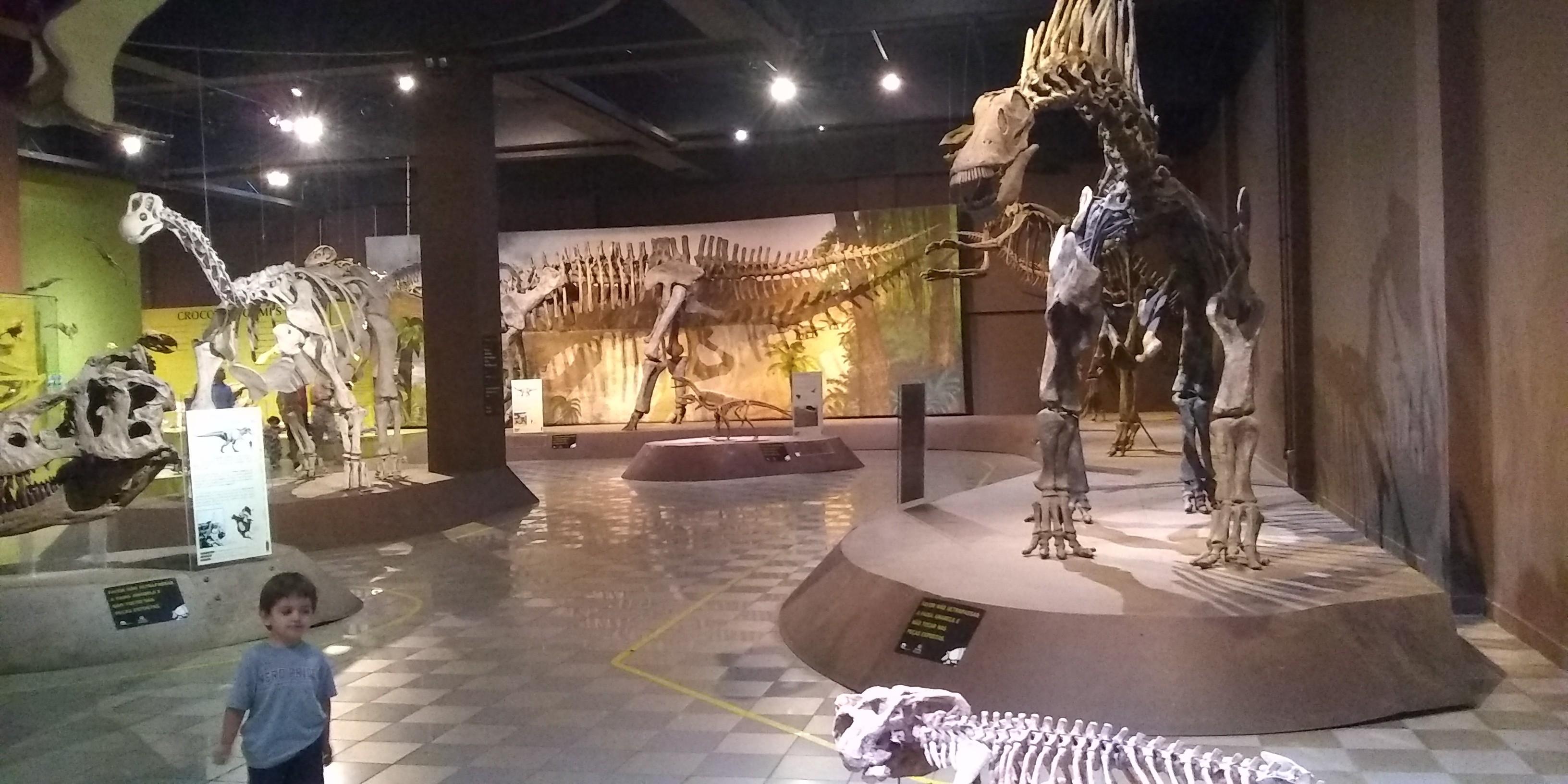 Museu de Ciências Naturais da PUC Minas reabre nesta quarta-feira; veja como agendar visita