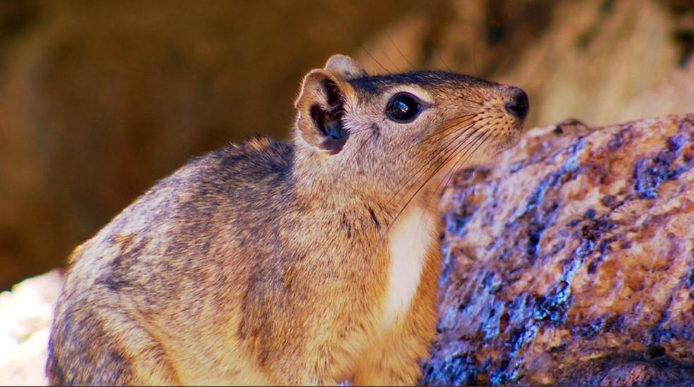 Descoberta do mocó como espécie exótica foi uma das vitórias do Projeto — Foto: Arquivo TG