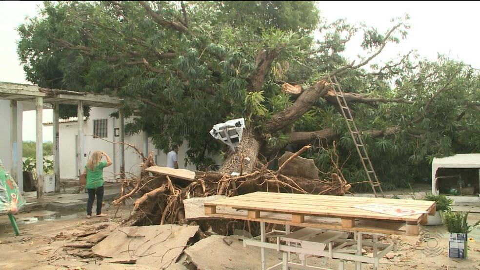 Chuvas com ventos fortes derrubaram árvores na quinta-feira (17) em Sousa, no Sertão da Paraíba — Foto: Reprodução/TV Paraíba