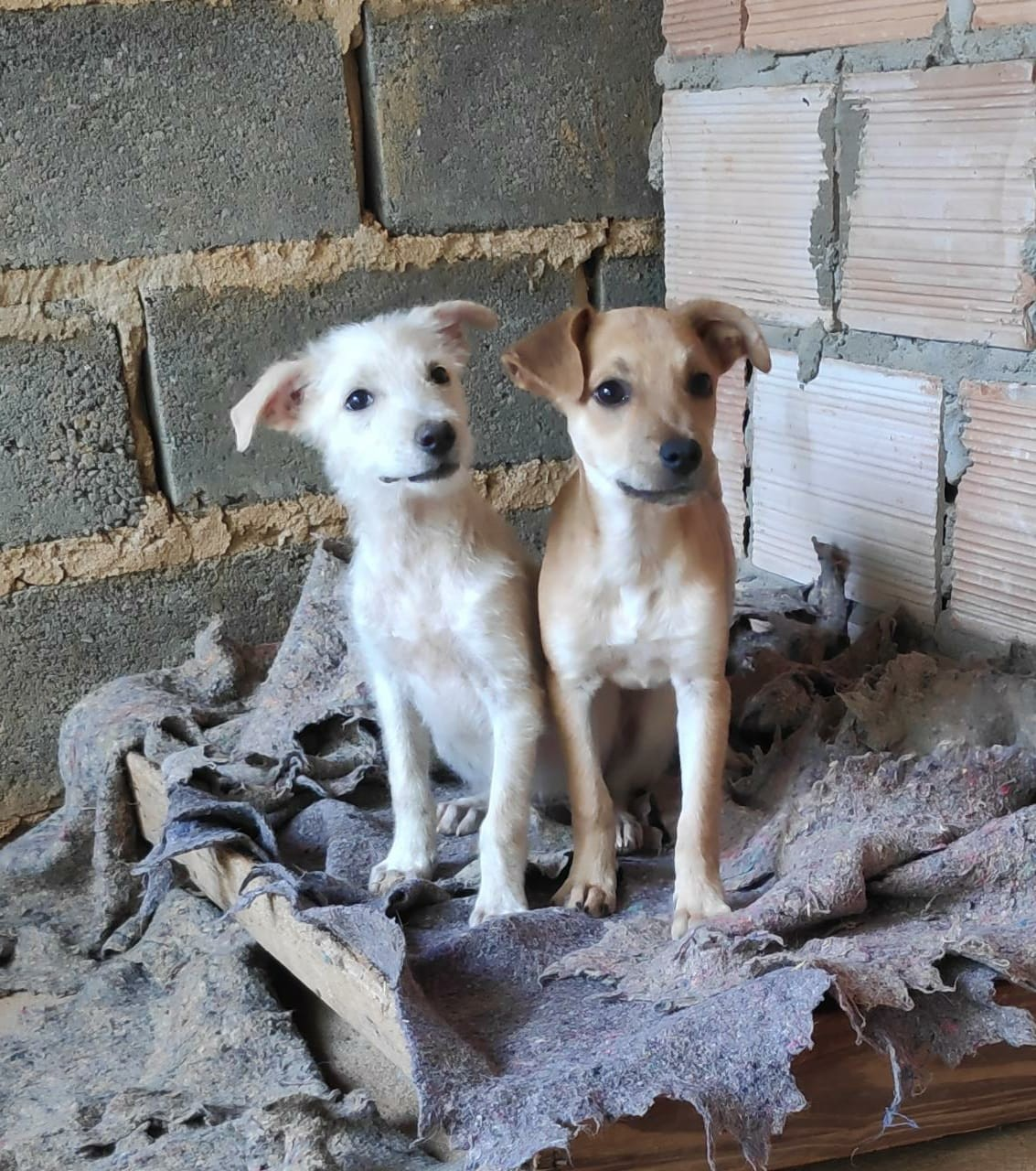 Live Pet Solidária é realizada para ajudar ONGs de animais em Montes Claros