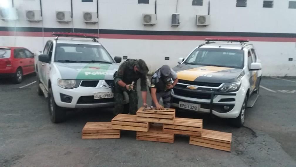 Seis caixas de madeira guardavam 165 papagaios em situação de maus-tratos em Campinas — Foto: Polícia Militar Ambiental