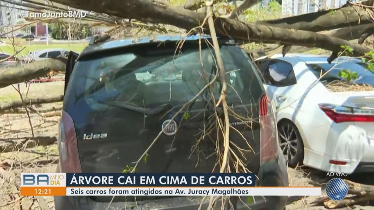 Seis carros são atingidos por árvore que caiu na Avenida Juracy Magalhães, em Salvador