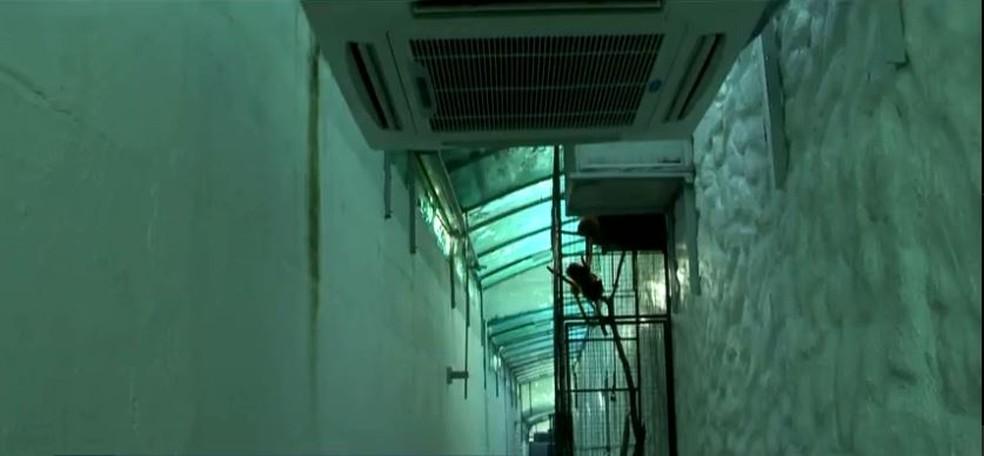 Aquecedores ficam na parte interna, em corredores, e ajudam a controlar temperatura no zoológico — Foto: Reprodução/NSC TV