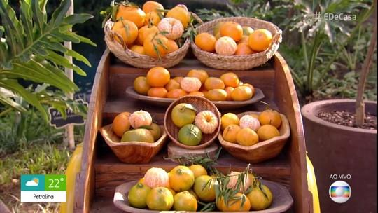 Jardinagem: conheça 4 árvores frutíferas para cultivar em casa