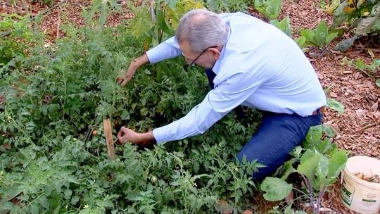 Morador planta hortifrútis em espaço público de Severínia