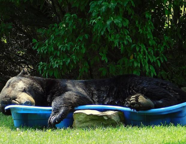 Urso dorme em piscina infantil nos EUA (Foto: Reprodução: Facebook )