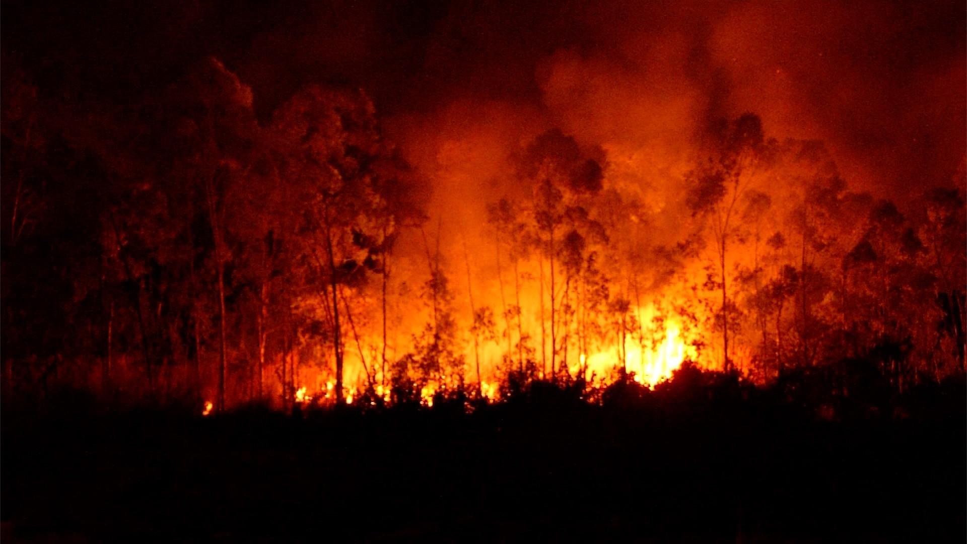 Incêndio atinge área verde próxima ao setor Bertaville em Palmas - Notícias - Plantão Diário