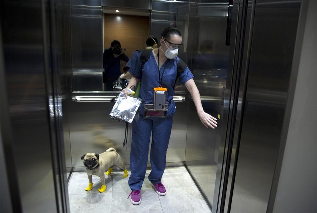 A doutora Lucía Ledesma leva seu cão, Harley, para trabalhar como cachorro terapeuta de equipes médicas em hospital da Cidade do México — Foto: Claudio Cruz/AFP