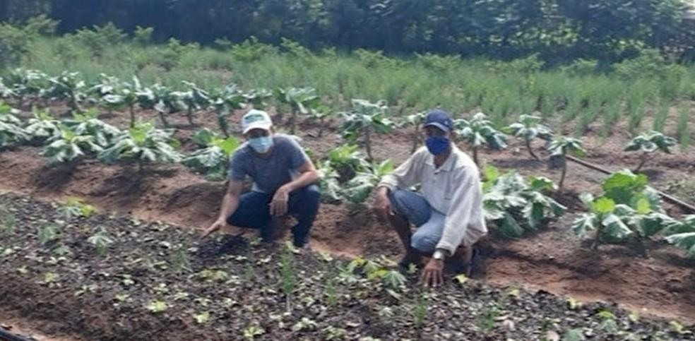 Produtores rurais de Araguaina (TO) que produzem alimentos destinados à merenda escolar — Foto: Reprodução/TV Anhanguera