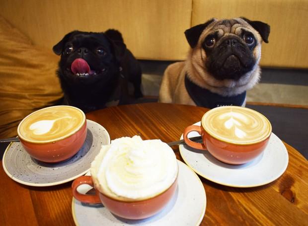 Pug Cafe (Foto: Divulgação)