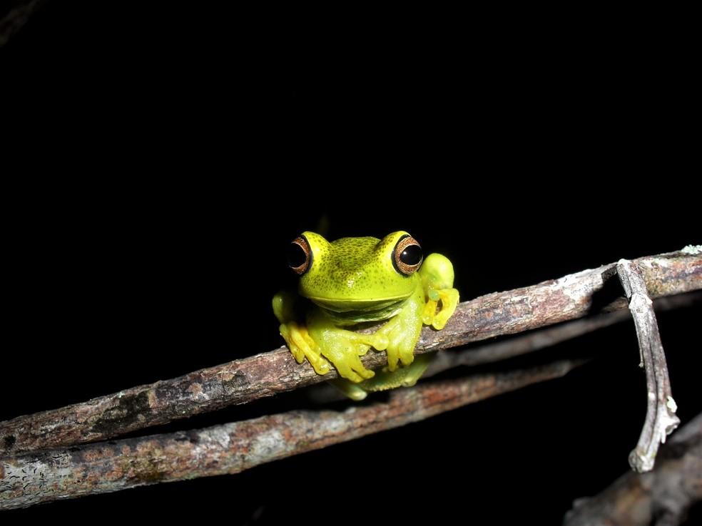 Biólogo sempre admirou a natureza e há pelo menos 10 anos registra a variedade de espécies — Foto: Pedro Medeiros/VC no TG