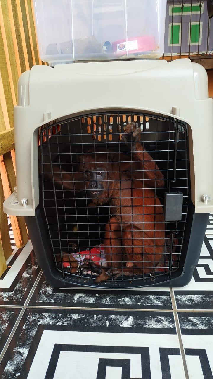 Homem é flagrado com mais de 20 animais silvestres entre cobras, araras e macaco em casa no AC - Notícias - Plantão Diário