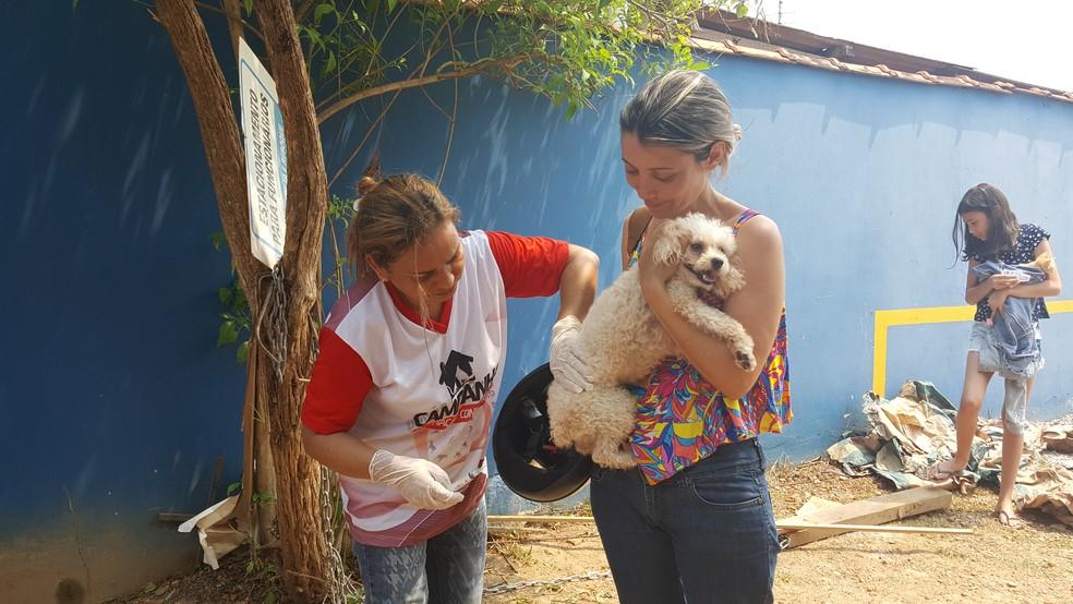 -  Quase 10 mil animais são vacinados em campanha no 2º Distrito de Ji-Paraná, RO  Foto: Pâmela Fernandes/G1