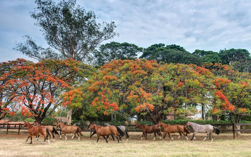 Eventos contribuem para que o mercado de cavalos ganhe novos adeptos no Brasil — Foto: Divulgação/ABCCC